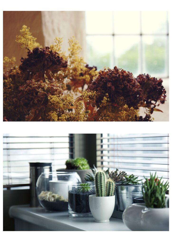 decoracion-plantas-dekinsa