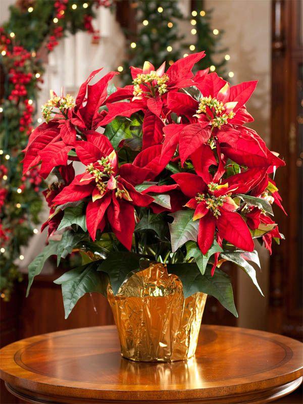 coronas-navidad-decoracion-navideña-dekinsa