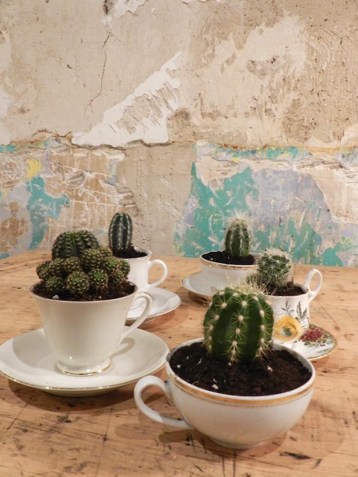 decorar-plantas-dekinsa
