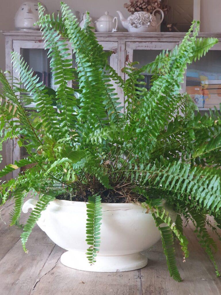 decorar-con plantas-dekinsa