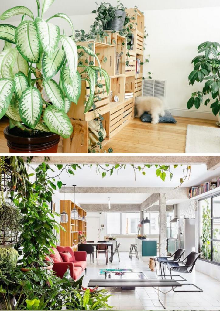 separar-espacios-plantas-dekinsa